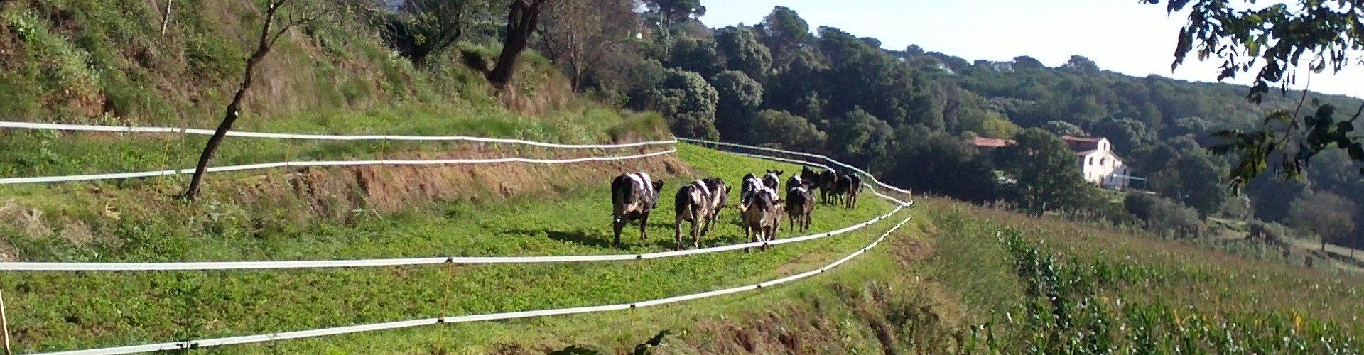Slider vacas