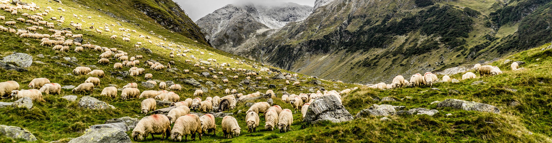 Slider monte ovejas